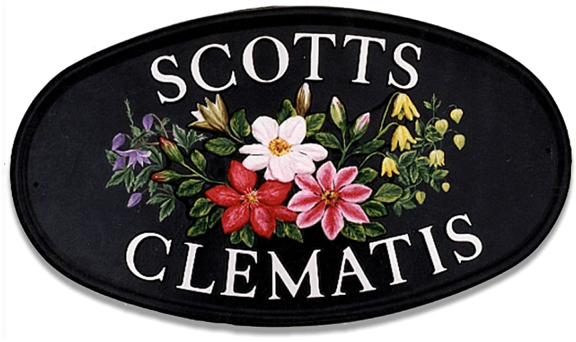 Clematis house sign